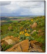 Palouse Sunflowers Canvas Print
