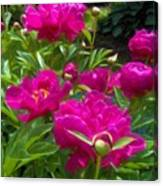 Pam's Perfect Peonies Canvas Print