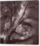 Pams Tree  Two B And W Canvas Print