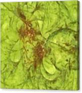 Pancreatoid Feeling  Id 16097-214225-63860 Canvas Print