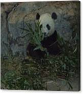 Panda Lunch Canvas Print