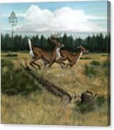 Panhandle Deer Canvas Print