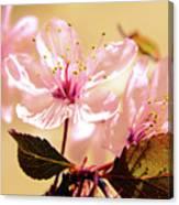 Panoplia Floral Canvas Print
