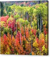 Panoply Of Autumn Color Canvas Print