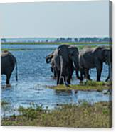 Panorama Of Elephant Herd Drinking From River Canvas Print