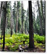 Panoramic Forest Canvas Print