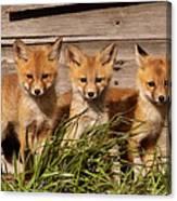 Panoramic Fox Kits Canvas Print