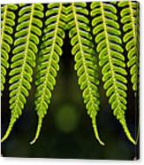 Panoramic Veil Of Ferns Canvas Print