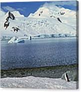 Panoramic View Of Chinstrap Penguin Canvas Print