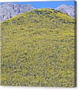 Panoramic View Of Desert Gold Yellow Canvas Print