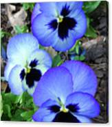 Pansies 0823 Canvas Print