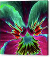 Pansy 01 - Photopower - Thoughts Of You Canvas Print
