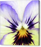Pansy 01 - Thoughts Of You Canvas Print