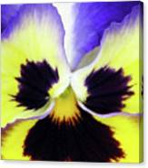 Pansy 09 - Thoughts Of You Canvas Print