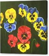 Pansy Lions Too Canvas Print