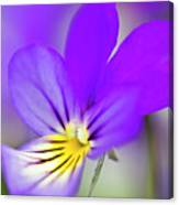 Pansy Violet Canvas Print