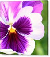 Pansy Wave Canvas Print