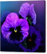 Pansys Canvas Print