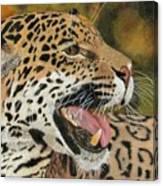 Panthera Canvas Print