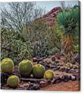 Papago And Barrels Canvas Print