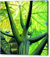 Papaya Tree Canvas Print