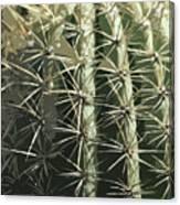Paper Cactus Canvas Print