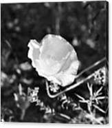 Paper Flower In B And W Canvas Print