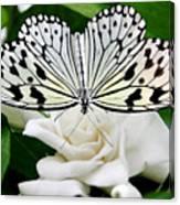 Paperkite On Gardenia Canvas Print
