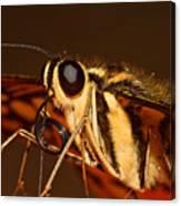 Papilio Demoleus Canvas Print