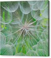 Parachutes For Seeds Canvas Print