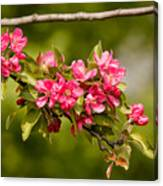 Paradise Apples Flowers Canvas Print