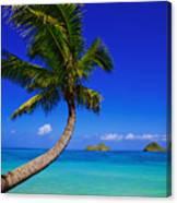 Paradise Palm Over Lanikai Canvas Print