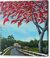 Paraiso Canvas Print