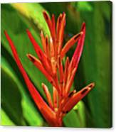Parakeet Flower Exotic Canvas Print