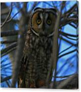 Parallel Leanings - A Hooter Study Canvas Print
