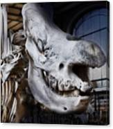 Paris Gallery Of Paleontology 3 Canvas Print