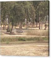 Park Near The Source Of The Yarkon River Canvas Print