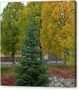 Park Trees Canvas Print