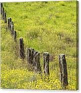Parker Ranch Fence Canvas Print