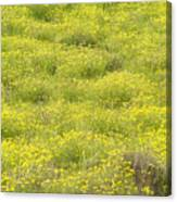 Parker Ranch Field Of Yellow Canvas Print