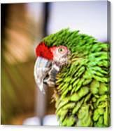 Parrot 2 Canvas Print