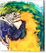 Parrot Ara Watercolor Painting Canvas Print