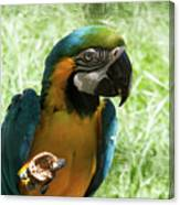 Parrot Eating Nut Canvas Print