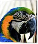 Parrot Head Canvas Print
