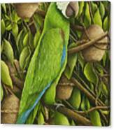 Parrot In Brazil Nut Tree Canvas Print