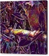 Parrot Macaw Bird Tropical  Canvas Print