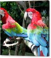 Parrot Partners Time To Make Up Canvas Print