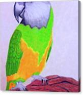 Parrot Portrait Canvas Print