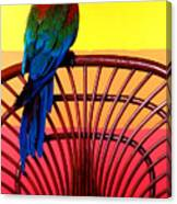 Parrot Sitting On Chair Canvas Print
