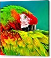 Parrot Time 2 Canvas Print